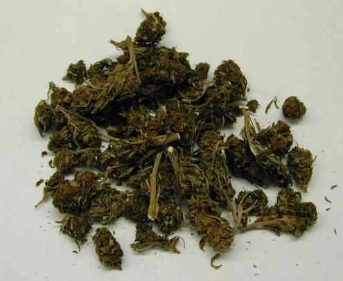 Suszone liście marihuany
