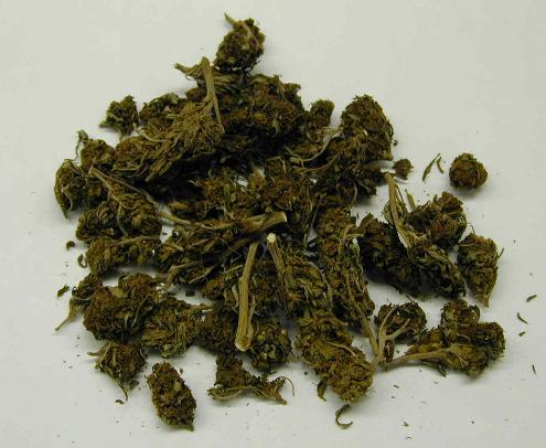 Suszone li�cie marihuany